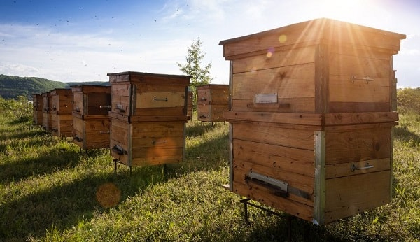 Types of Beehives
