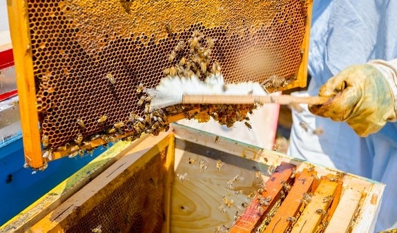 Beekeeper Brushing Bees into Hive