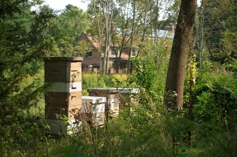 Beehive Located in a Quiet Place