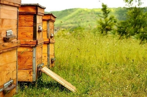 Beehive Placement