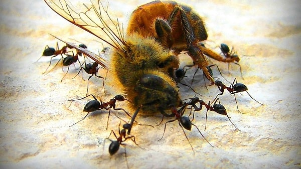 Get Rid of and Deter Ants in Beehive
