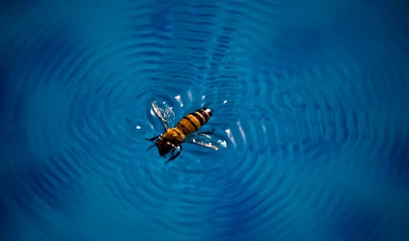 How to Keep Bees and Wasps Away from Pool