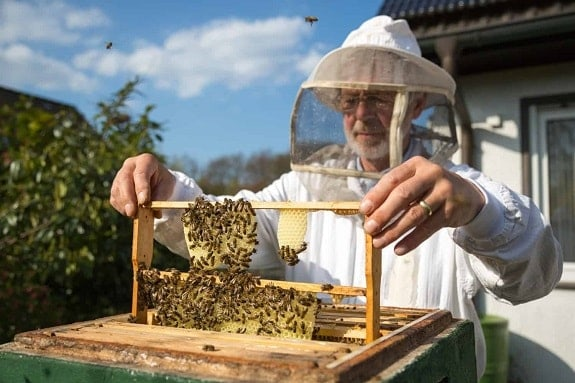 How to Perform a Beehive Inspection