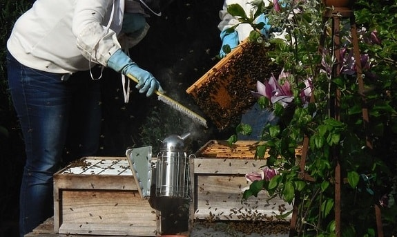 Clumsy beekeepers make honey bees aggressive towards them