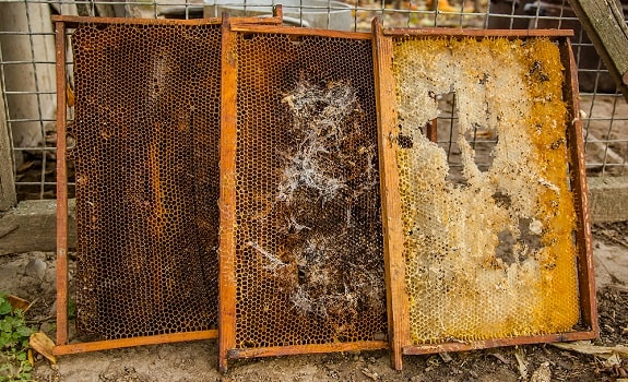 Wax Moth Treatment in Beehives