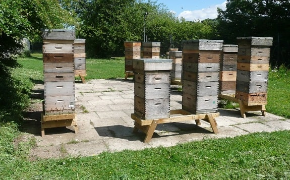 diy beehive stand plans