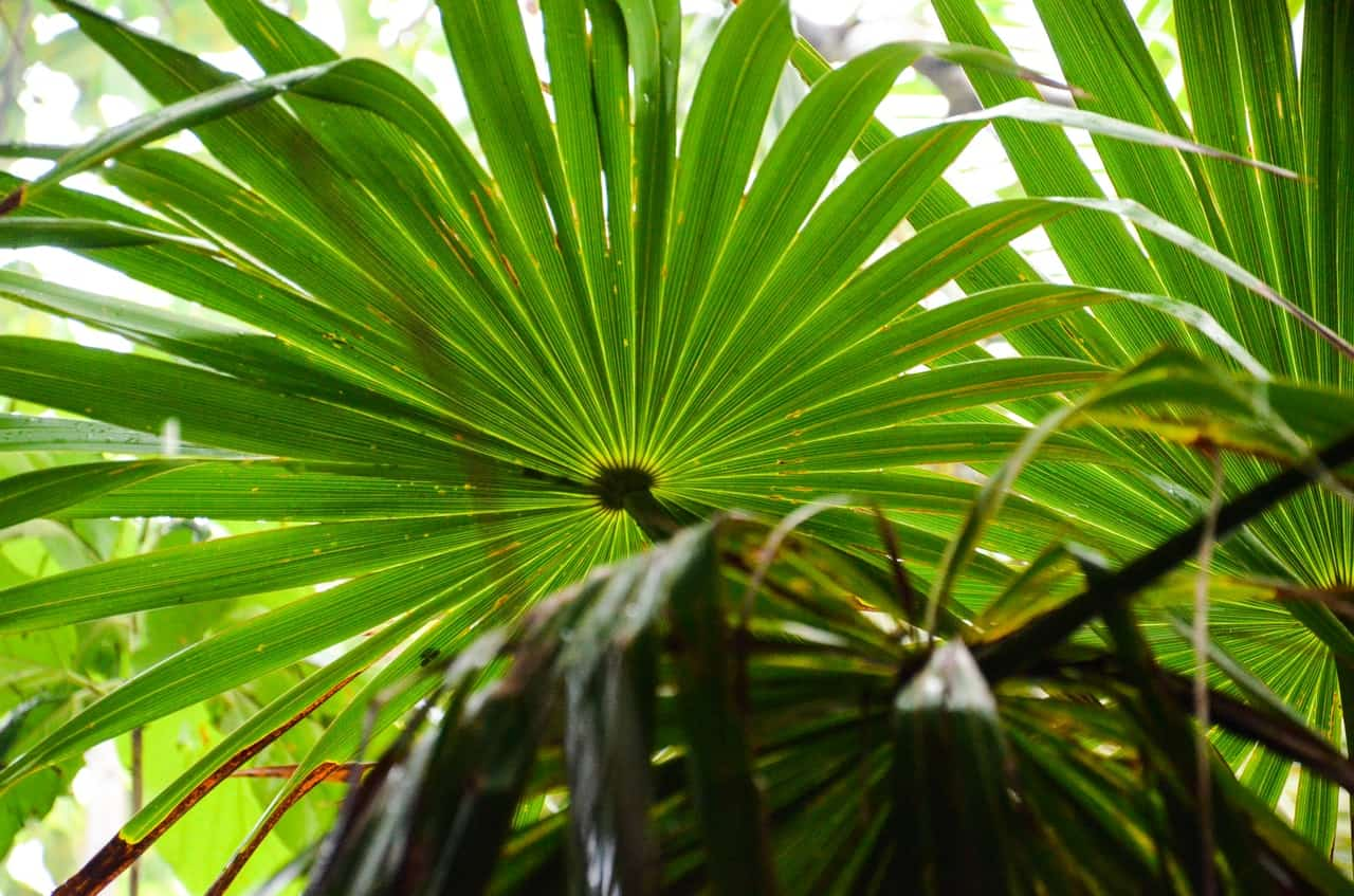 What Is Palmetto Honey