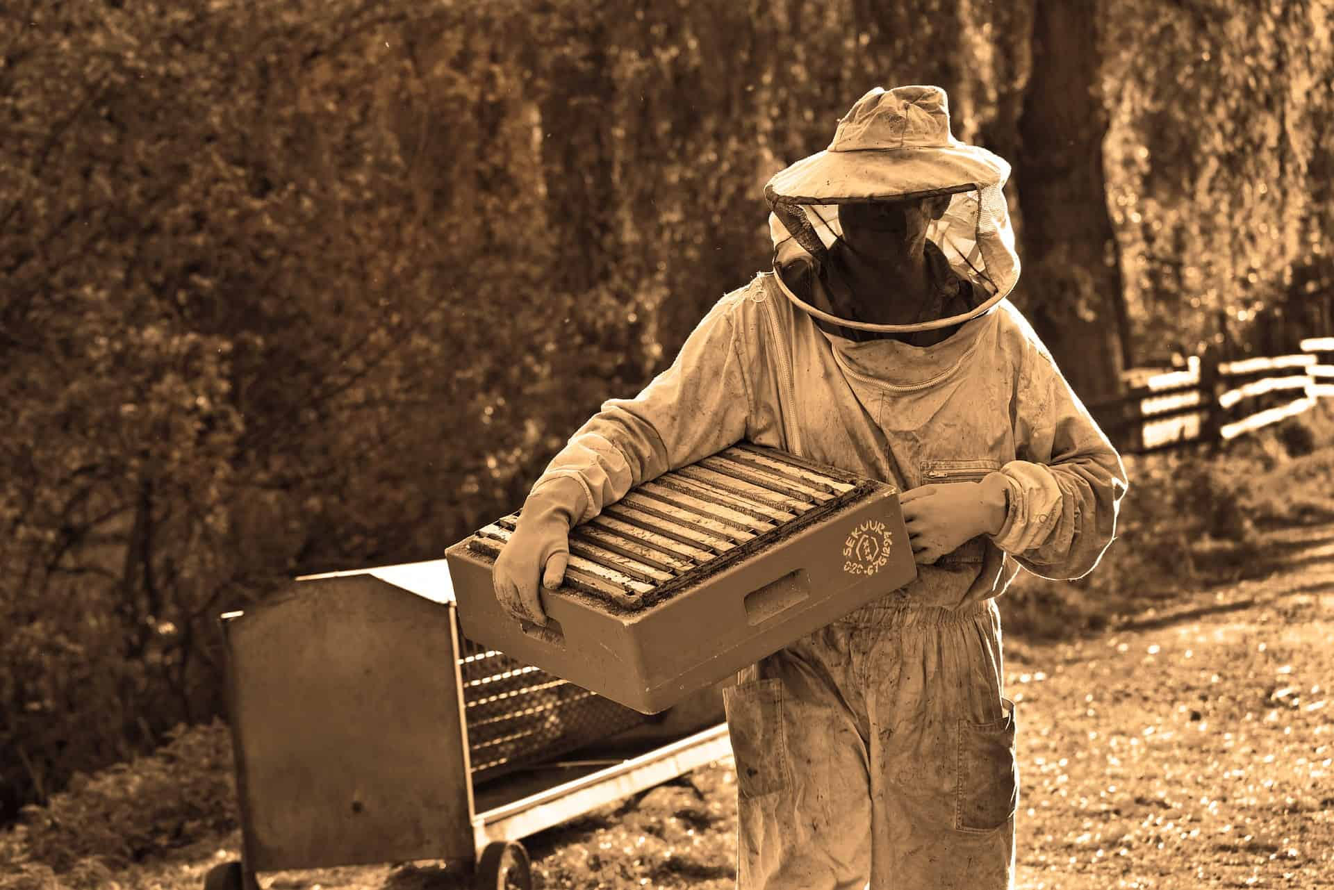 How to clean your beekeeping equipment